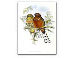 Birds in Love, vintage illustrationhttp://www.etsy.com/listing/93681973/birds-in-love-vintage-illustration?ref=tre-2723248572-1#681team