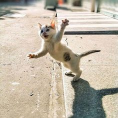 Cute is Not Enough - Funny Cats and Dogs Compilation Funny Animal Memes, Funny Animal Pictures, Cute Funny Animals, Cute Baby Animals, Animals And Pets, Cute Cats, Funny Humor, Funny Images, Silly Cats