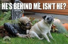 Search results for tag_Halloween_meme Humour Halloween, Chien Halloween, Funny Halloween Memes, Funny Dog Memes, Funny Captions, Dog Halloween, Funny Dogs, Happy Halloween, Halloween Quotes