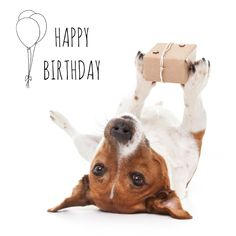Looking for for inspiration for happy birthday friendship?Check this out for very best happy birthday inspiration.May the this special day bring you happy memories. Silly Happy Birthday, Birthday Meme Dog, Happy Birthday Animals, Happy Birthday Wishes Quotes, Best Birthday Quotes, Happy Birthday Images, Happy Birthday Greetings, Animal Birthday, Card Birthday