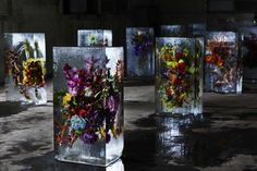 This Is What Happens When You Encase Flowers In Giant Cubes Of Ice  http://huff.to/1yrEbeQ