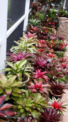 Awesome bromeliad garden