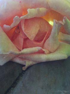 coeur de rose, bassin d'Arcachon, ©Corinne Granger