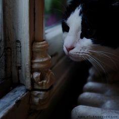 #window #cat #melaniedelon