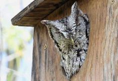 How to Attract Owls to Your Yard and Solve Your Pest Problem Owl Nest Box, Owl Box, Chicken Nesting Boxes, Garden Owl, Bird Houses Diy, Bluebird Houses, Bird House Plans, Bird Boxes, How To Attract Birds