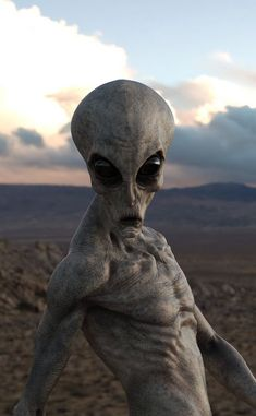Area 51 has been a mystery since It is a very secretive military testing site believed to contain hidden Alien artifacts and information. This image represents a hypothetical full color HD photo of an Alien in Area 51 from the year Alien Creatures, Fantasy Creatures, Mythical Creatures, Alien Tattoo, Aliens And Ufos, Ancient Aliens, Dark Photography, Aesthetic Photography Nature, Trippy Alien