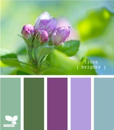 Color palette ideas - purple and green