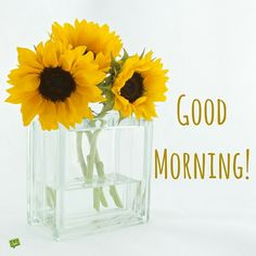 Good Morning Picture with yellow flowers in a vase.