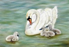 How To Draw a Swan and Signets using Pastel Pencils: http://www.colinbradleyart.co.uk/home/sign-up/
