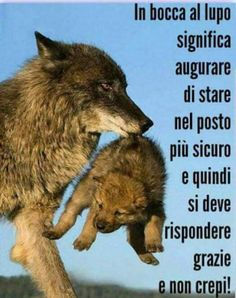 Per chi non lo sa ancora Verona, Animals And Pets, Cute Animals, Coaching, Some Words, Teen Wolf, Animal Kingdom, My Best Friend, Funny Quotes