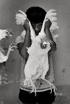 Graciela Iturbide, El gallo, Juchitán, México, 1986