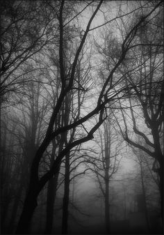 Dramatic black and white trees