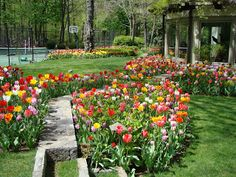 Serenity in the Garden: Tiptoe through the Tulips