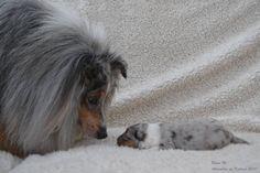 Daddy meets his newborn Son