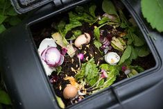 3 Bin Compost System: Everything You Need to Know! Garden Pests, Garden S, Types Of Ants, Crushed Limestone, Making A Compost Bin, Composting Process, Ants In House, Compost Tumbler