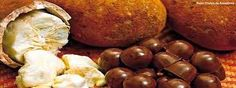 Bagagem Pronta - Passeio e Turismo: TURISMO GASTRONÔMICO: Mistura do chocolate com igu... Exotic Food, Exotic Fruit, Cupuacu, Pretzel Bites, Baked Potato, Benefit, Stuffed Mushrooms, Potatoes, Vegetables
