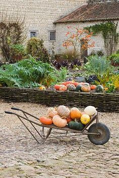 Collecting the Pumpkins