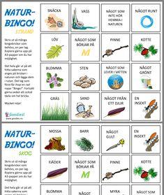Bingo, Preschool Activities, Insects, Outdoors, Flowers, Inspiration, Biblical Inspiration, Outdoor, Kindergarten Activities