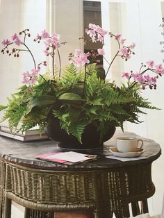Orchids and ferns, centerpiece. Planter with orchids and curly fern. - Orchids and ferns, centerpiece. Planter with orchids and curly fern. Be careful, because the orchid -