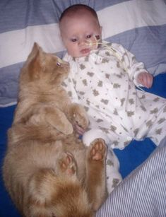 "A ginger cat never left the side of his little human brother from the day they found out that their baby had a broken heart.  	 Photo courtesy of Kirsty Jai Skelton  	Siggy the cat met his little baby brother Isaac when he was born 13 days overdue. ""We came home that same night when he met Siggy f..."