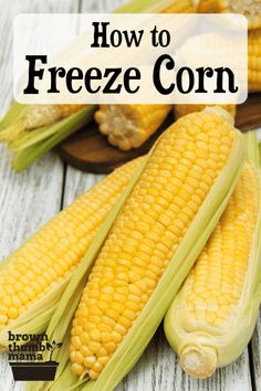 Find out how to freeze corn on the cob without sacrificing the taste or texture. Learn our tips and tricks to help keep your corn tasting fresh. #preservingfood #naturalliving #homesteading #ecofriendly Water Bath Canning, Bundt Cake Pan, Canning Tips, Ears Of Corn, Pressure Canning, Frozen Corn, Macaroni Salad, Kool Aid, Sweet Corn
