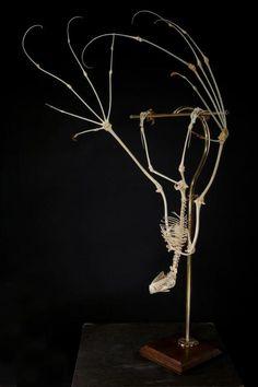 Taxidermy Bat Skeleton