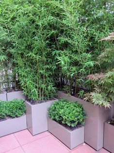 We live privacy plants that are hard to control (Bamboo, tall grasses etc) but by keeping them in planters (individually or box) you control the earth they have access to. Description from pinterest.com. I searched for this on bing.com/images