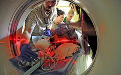 (And what became of the big bad wolf?) Veterinary staff prepare a Mexican gray wolf for a CT scan at Brookfield Zoos Animal Hospital in Brookfield, Illinois, on April 18, 2012. Through a study of Mexican gray wolves using CT (CAT) scans, researchers hope to aid in conservation efforts of the endangered species, and determine whether a type of nasal tumor is more prevalent in wolves or domestic dogs. (AP Photo/Chicago Zoological Society, Jim Schulz)