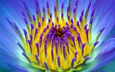 We also have lots of images of nature and flowers so the one who really loves nature can also find there images