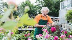 Rozmnožte si ruže z odrezkov. Je to úplne jednoduché Gardening, Plants, Garten, Flora, Plant, Lawn And Garden, Planting, Horticulture