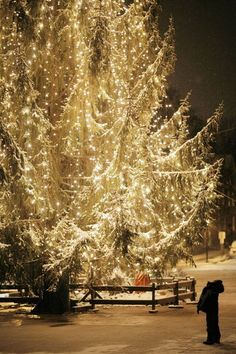 Gorgeous White Christmas Lights Around This HUGE Beautiful Live Tree! Christmas Time Is Here, Noel Christmas, Merry Little Christmas, Christmas Photos, All Things Christmas, Winter Christmas, Christmas Lights, Christmas Decorations, Outdoor Christmas