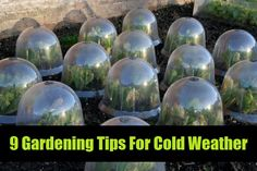 9 Gardening Tips For Cold Weather | Idees And Solutions