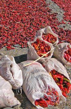 Mar rojo - Foto: Karina Jozami  Foto 40 de 45  next