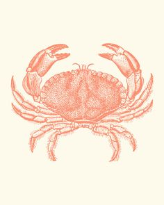 Coral Pink Baltimore Steamed Crab Art Print 8 x 10. $12.00, via Etsy.