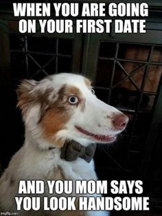 Here is a daily dose of funny animal pictures of the day - Wackyy animal picdump If you are an animal lover and looking for animal humor, then you like these funny animal pics and memes of the day. Funny Animal Memes, Cute Funny Animals, Funny Animal Pictures, Cat Memes, Funny Cute, Funny Dogs, Funny Memes, Ironic Memes, Animal Pics