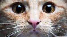 Картинки по запросу gatinhos fofos