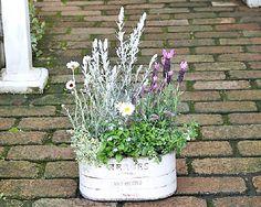 花寄せ植え・観葉植物・ガーデニング雑貨の通販ならサザンフィールドをご利用ください。開店祝いの贈り物やインテリアにおすすめの観葉植物・花・多肉植物・ハーブの寄せ植えやかわいい雑貨を販売をしております。
