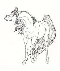 Arabian Horse Lineart by ReQuay