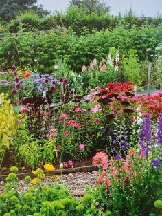 The Cut Flower Patch ~ a guide to growing your own beautiful cut flowers throughout the year #cutflowers #flowergarden #cottagegarden #flowers #gardening