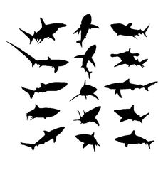 Amazing Black Shark Tattoo Stencil Superior Black Shark Tattoo Back To Black Shark TattooOrnate Black Shark Tattoo Black Shark Tattoo For Design Isolated On White,… Hammerhead Shark Tattoo, Shark Tattoos, Shark Silhouette, Silhouette Tattoos, Navy Tattoos, Black And Grey Tattoos, Tatoos, Tribal Shark, Octopus Design