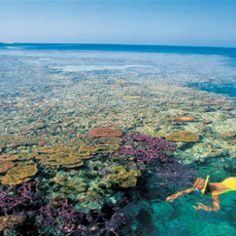 The Great Barrier Reef-would love to snorkle there!!!