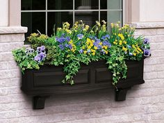 Jak pěstovat květiny na balkoně | Teta Dita