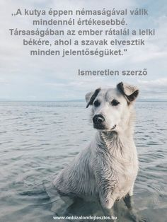 Goodness – How unselfish actions boost self-confidence Dog Quotes Love, Pet Loss, Love You More Than, Self Confidence, Mans Best Friend, Daily Quotes, Polar Bear, Fur Babies, Dogs And Puppies