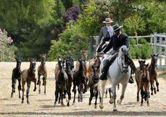 Latido Equestre. A herd of foals