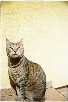 Dangerous cat Dangerous Cat, Lomography, Cats, Blog, Animals, Gatos, Animales, Animaux, Blogging