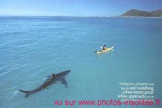 I'm not sure whether this is funny or scary?! photo-insolite-requin-kayak