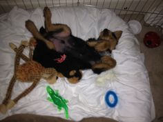 Baby Jake sleeping on all his toys