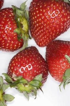 Como cultivar morangos em vasos dentro de casa | eHow Brasil