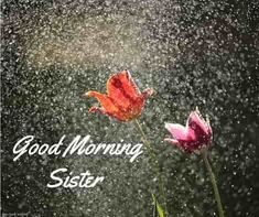 Looking for Good Morning Wishes for Sister? Start your day by sending these beautiful Images, Pictures, Quotes, Messages and Greetings to your Sis with Love. Good Morning Sister Images, Good Morning Rainy Day, Good Morning Love Gif, Good Morning Romantic, Good Morning Nature, Good Morning Flowers, Good Morning Greetings, Morning Pictures, Good Morning Wishes