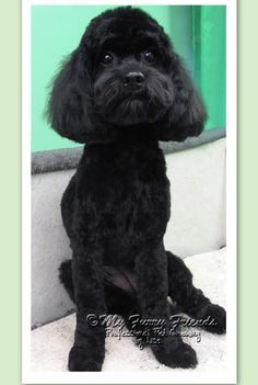29 best dog grooming images on pinterest dog grooming dog dog grooming dog grooming business solutioingenieria Image collections
